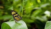 Motýlia šou v košickej Botanickej záhrade