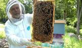 Ako sa stať včelárom