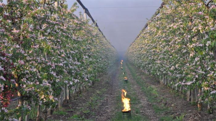 Retour de l'hiver : fruits en danger
