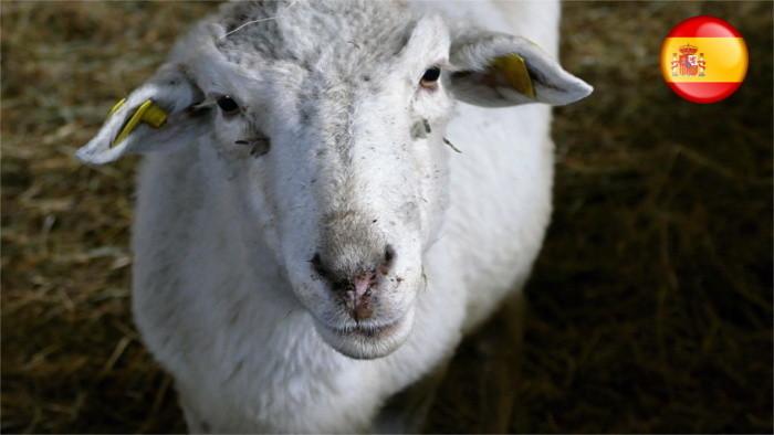En Eslovaquia los corderos eran símbolos de comercio agrario primaveral