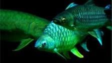 V zdravom tele - Ryby