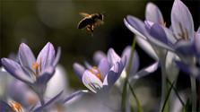 Botanickú záhradu otvoria opäť na jar