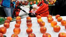 Wie schmeckt slowakischer Apfel?