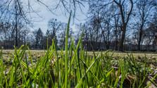 Bratislava will Klimawandel abfedern