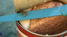 Nebezpečné uštipnutie bodavým hmyzom