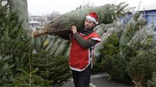 Vianočný stromček vnáša do domácností atmosféru najkrajších sviatkov roka