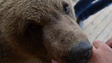 Bär streicheln im Zoo Kontakt in der Mittelslowakei