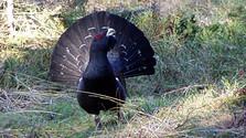 Strengere Regeln für den Vogelschutz