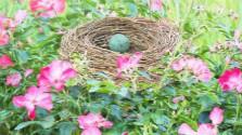 Vtáčie hniezda na balkóne