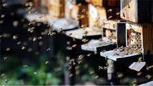 Beekeepers protest against use of neonicotinoids