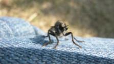 Naozaj? Čo účinkuje na hmyz?