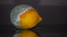 Plesnivé ovocie