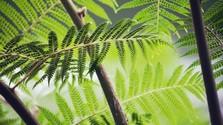 Zážitkové spoznávanie Botanickej záhrady