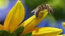 Prvý včelí med