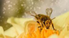 Hmyz mizne z prírody