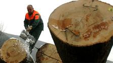 Abholzung wird zum wichtigen öffentlichen Thema