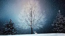 Cyklus: Zimná rozprávka, alebo príbeh na dnešné ráno
