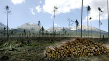 Hohe Tatra 13 Jahre nach der Sturmkatastrophe