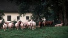 Čo musia spĺňať rodinné farmy?