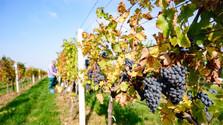 Malá krajina s veľkými vínami