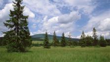 Region Orava: Blaudruck, Schafsmilch und Heidelbeerschnaps