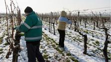 En Eslovaquia crece el interés en la vitivinicultura