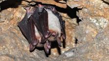 Slovenský Kras - lugar favorito para los murciélagos en hibernación