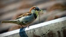 Vtáci a ich hniezda = pozorovať, ale nechytať!