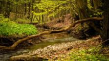 V našich pralesoch zväčšia zónu bez zásahov