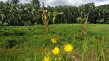 Словацкие биосферные заповедники соответствуют критериям ЮНЕСКО