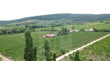 Con Edita Ďurčová sobre los problemas de la viticultura eslovaca