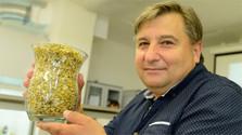 Slowakische Wissenschaftler kreuzten neue Kamillensorte