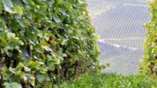 Čo si brali naši predkovia do vinohradov