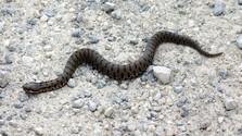 Kígyómarás a Kis-Fátrában