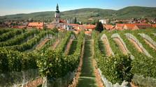 La producción de vino de este año será excelente