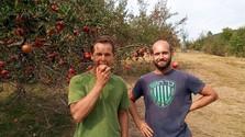 Slowakische Obstgärten mit Geschichte und Zukunft