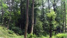 « Les Forêt d'État » contre « Nous sommes la forêt »