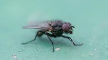 Ako zimuje hmyz?