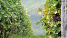 Bodocké vinohrady pri Nitre
