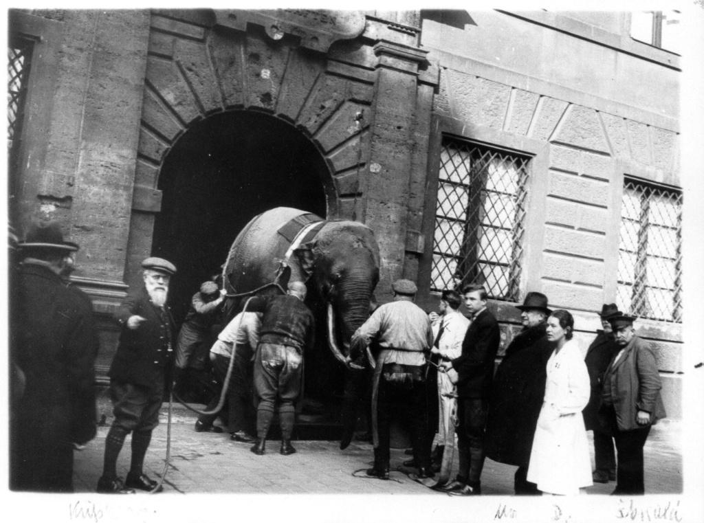ElephantUmzugFoto.jpg