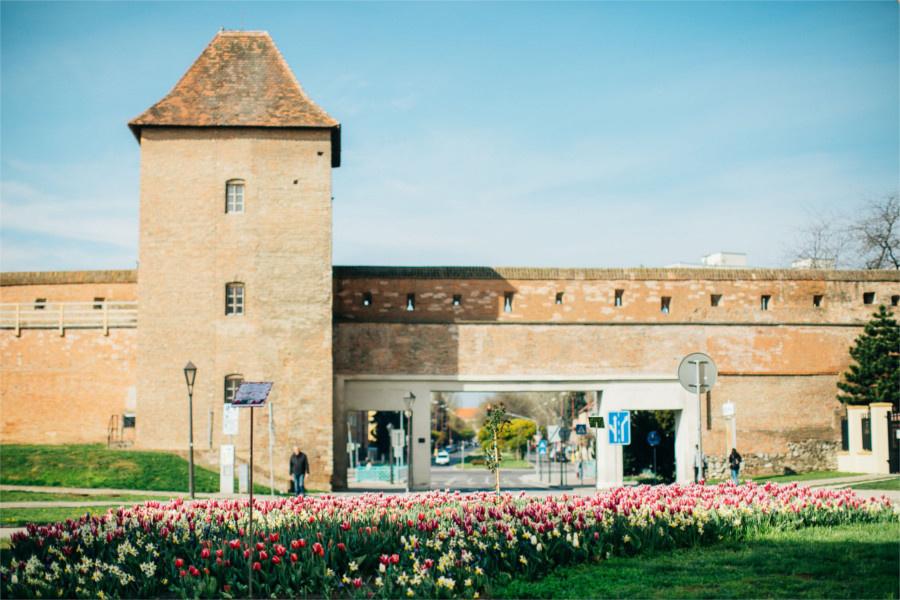 Trnava gate s tulipanmi_mesto Trnava.jpg